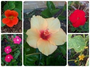 five petal flower collage