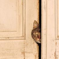 find-the-cat